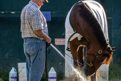 The Horse Waterer