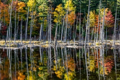 Fall Colors On Beaver Pond