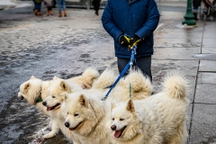 Quintuplet Dog Walker