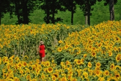 1115PRG0-General[Luba_Ricket]Strolling_Thru_Sunflowers