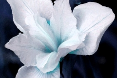 Blue And White Flower Sps